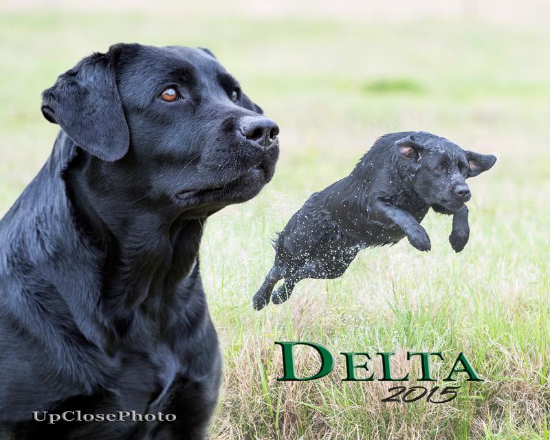 DeltaV4_W